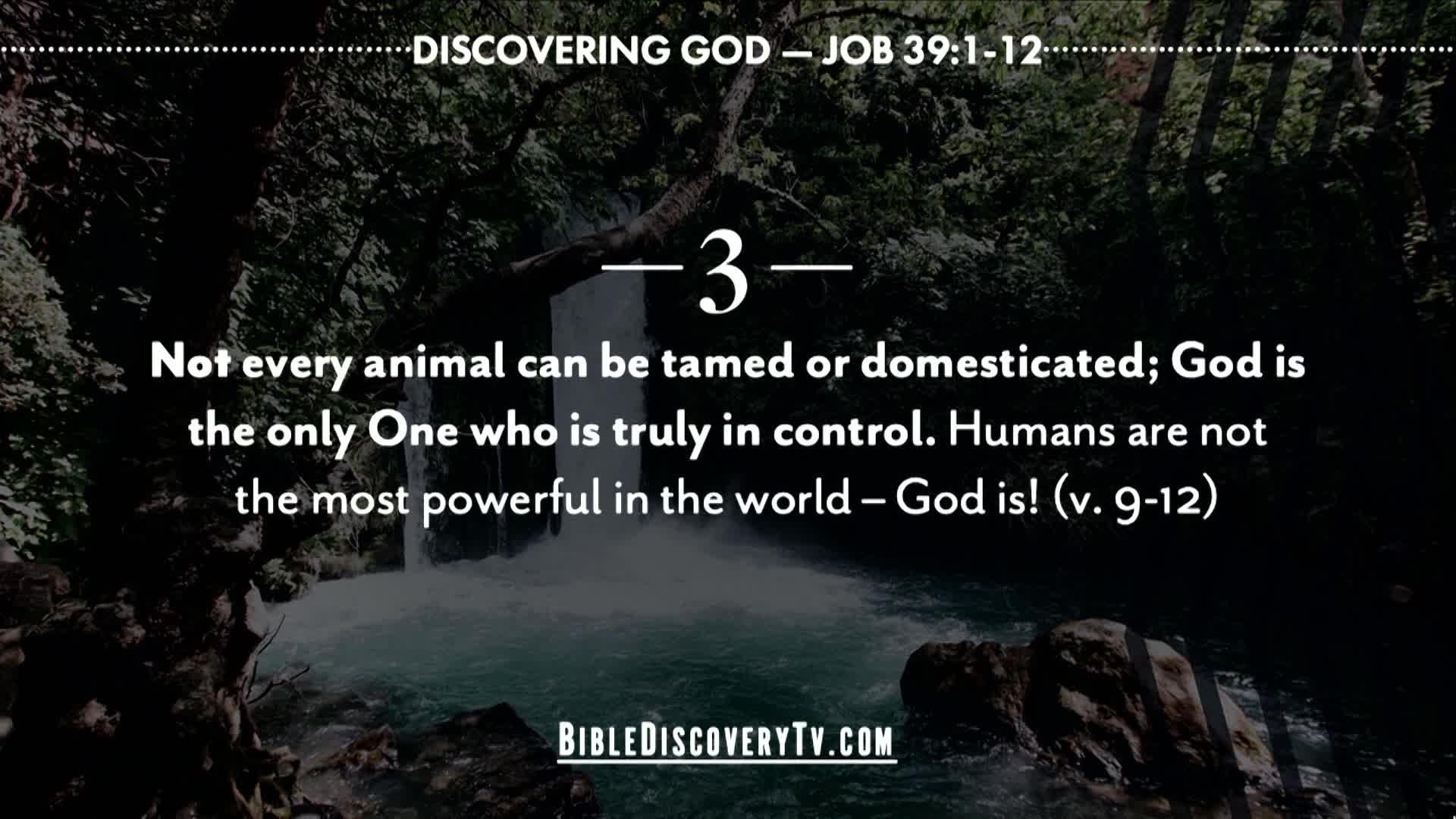 Bible Discovery - Job 39 God Answers