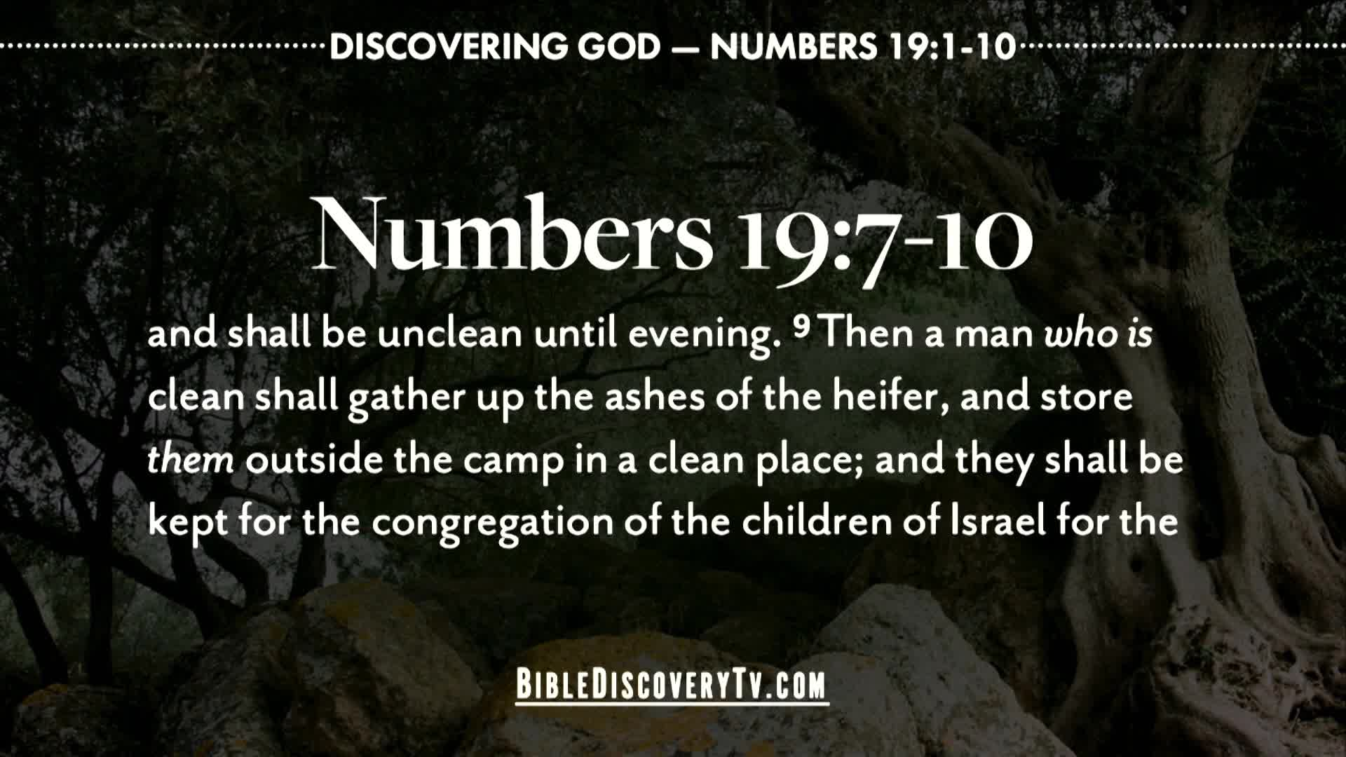 Bible Discovery - Numbers 19 The Red Heifer